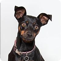 Adopt A Pet :: Gracie - San Luis Obispo, CA