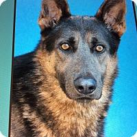 Adopt A Pet :: ASHER VON ASPERG - Los Angeles, CA