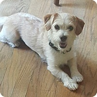 Adopt A Pet :: Charleston - Alpharetta, GA