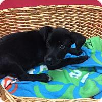 Adopt A Pet :: Bonnie - Decatur, AL