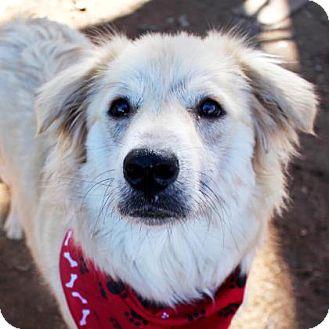 Golden Retriever/Labrador Retriever Mix Dog for adoption in Austin, Texas - Gisele