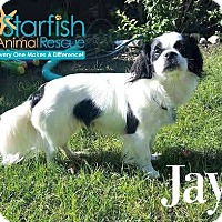 Adopt A Pet :: Jay - Plainfield, IL