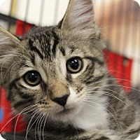 Adopt A Pet :: Buckeye - Sarasota, FL