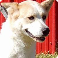 Akita Mix Dog for adoption in Joplin, Missouri - Girl