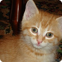 Adopt A Pet :: Darby - Fort Atkinson, WI