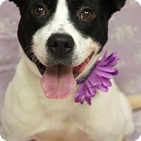 Adopt A Pet :: Maxine - Newnan City, GA