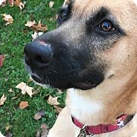 Adopt A Pet :: Circe - Hainesville, IL