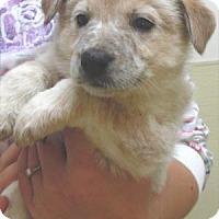 Adopt A Pet :: Thomas - Waupaca, WI