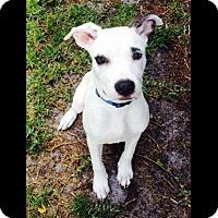 Adopt A Pet :: Tucker - Saint Augustine, FL
