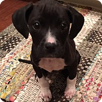 Adopt A Pet :: Lucy - Irmo, SC