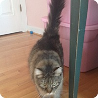 Adopt A Pet :: Davey Crockat - Richmond, VA