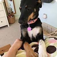Adopt A Pet :: Sadie 2 - Halethorpe, MD