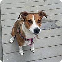 Adopt A Pet :: Princess - Bardonia, NY