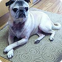 Adopt A Pet :: Winnie - Hinckley, MN