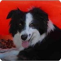 Adopt A Pet :: Hope - Ft. Myers, FL