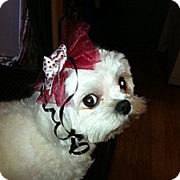 Adopt A Pet :: Soo  Jin - Northumberland, ON