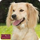 Adopt A Pet :: Peluche