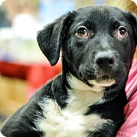 Adopt A Pet :: Sam Merlotte - Gainesville, FL