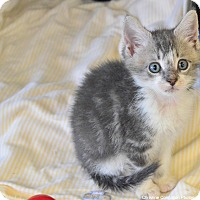 Adopt A Pet :: Sue, Pete & Freddy - Island Park, NY