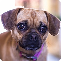 Adopt A Pet :: BELLA - Nashville, TN