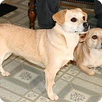 Adopt A Pet :: Mabel and Dipper - Burbank, OH
