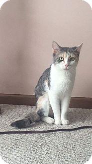 Calico Cat for adoption in Columbus, Ohio - Mozzi