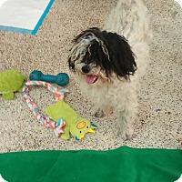 Adopt A Pet :: Sherman - Thousand Oaks, CA