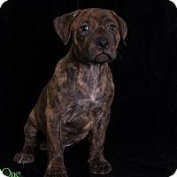 Adopt A Pet :: Portobello - Savannah, GA