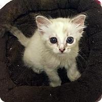 Adopt A Pet :: Eloise - Austin, TX