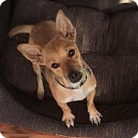 Adopt A Pet :: Clara - Fresno, CA