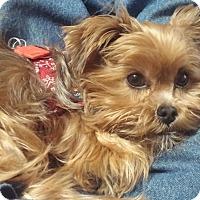 Adopt A Pet :: MIA-pending - Eden Prairie, MN