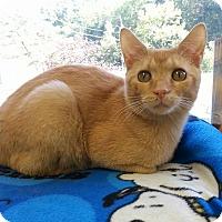 Adopt A Pet :: Chetty - Shinnston, WV