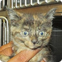 Adopt A Pet :: Cat 0005 - Rocky Mount, NC