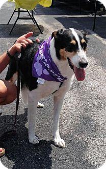 Shepherd (Unknown Type) Mix Dog for adoption in Corbin, Kentucky - Batista