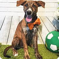 Adopt A Pet :: Qubie - Castro Valley, CA