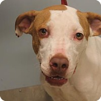 Adopt A Pet :: Zimon - Daytona Beach, FL