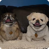 Adopt A Pet :: Sonny & Cher ~ Bonded Pair - Northville, MI
