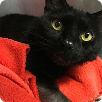 Adopt A Pet :: Orkid - Philadelphia, PA