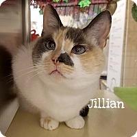 Adopt A Pet :: Jillian - Foothill Ranch, CA