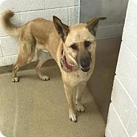 Adopt A Pet :: Miles - Miami, FL