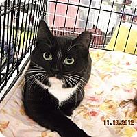 Adopt A Pet :: Frida - Riverside, RI