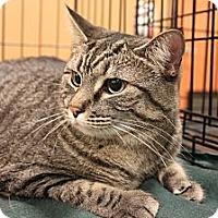 Adopt A Pet :: Eva & Jasper - Smyrna, GA