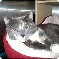 Adopt A Pet :: Freckles - Colmar, PA