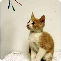 Adopt A Pet :: Casey - Mesa, AZ