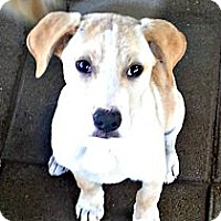 Adopt A Pet :: Sleepy - Silsbee, TX