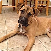 Adopt A Pet :: Bodhi  8 months old - Marlton, NJ