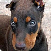 Adopt A Pet :: Baby Lindorff - Oakley, CA