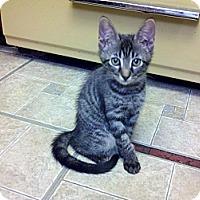 Adopt A Pet :: Pandora - Ocala, FL