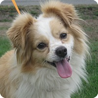 Adopt A Pet :: Rudy - Tumwater, WA