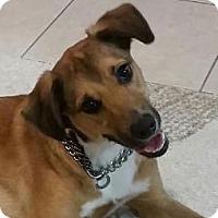 Adopt A Pet :: Bullet - Miami, FL